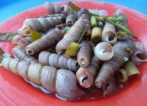 Cay nồng ốc biển Sầm Sơn